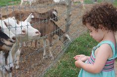 Simmons Farm in Middletown, Rhode Island
