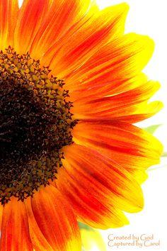 Sunflower tattoo???!