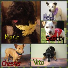 Collin County Humane Society McKinney, TX  COME VISIT US TODAY at Petsmart in Allen (170 E Stacy Rd)! We will be there from 11am-4pm with some of our great CCHS pups. Read their full bios at http://collincountyhumanesociety.org/available-dogs.html!