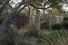 dry garden with grasses, clipped shrubs, windswept trees, open wood fence – wabi… – Australian Landscaping Bush Garden, Dry Garden, Garden Shrubs, Fence Garden, Coastal Landscaping, Modern Landscaping, Backyard Landscaping, Coastal Gardens, Beach Gardens