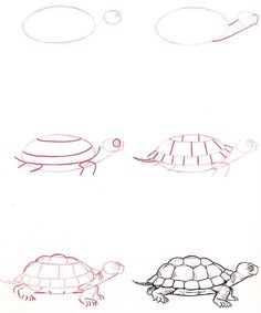 Learn to draw Turtles