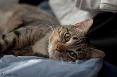 Pippin, precioso gato de mi amiga Nerea, muuuuy fotogénico
