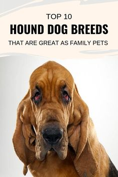 According to the American Kennel Club, there seven different types . Read moreTop 10 Hound Dog Breeds that are Great as Family Pets Best Family Dog Breeds, Best Pet Dogs, All Breeds Of Dogs, Dog Breeds List, Best Dog Breeds, Hound Dog Breeds, Every Dog Breed, Pet Raccoon, Best Dogs For Families