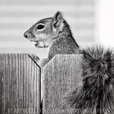 B&W Squirrel Profile