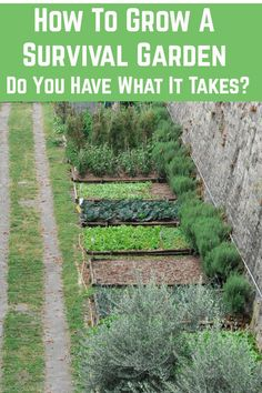 How To Grow A Survival Garden - Do You Have What It Takes? - A survival garden is one that is carefully designed to yield enough crops for you and your family to live off of in times of need. Here's how to grow one. Growing Herbs, Growing Vegetables, Succession Planting, Survival, Sustainable Farming, Different Plants, Patio, Backyard, Fruit Garden
