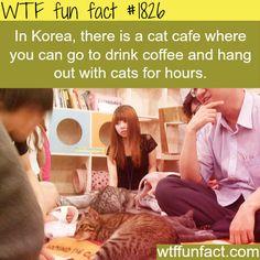 Korea Cat Cafe!!!! OMG I MUST GO HERE