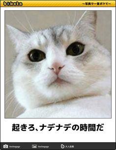 画像 Funny Cat Photos, Funny Pictures, Animals And Pets, Cute Animals, Neko Cat, Animal 2, Cute Animal Pictures, Funny Moments, Funny Cute