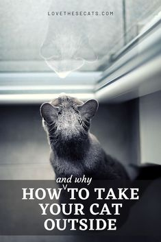There are so many benefits of taking your cat outside! But doing so unsupervised has innumerable risks to your cat. Here's how (and why!) to take your cat outside safely and easily so you both have a TON of FUN and reap all the benefits of the great outdoors! Orange Cats, White Cats, Cute Kitten Gif, Kittens Cutest, Cat Behavior Problems, Cats Outside, Kitten Care, Kinds Of Cats, Outdoor Cats
