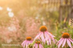 Beautiful soft light in this one by Cheryl McCain