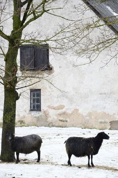 Old house, the black sheep, French country: