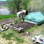 Community Garden, Pagosa Springs, CO