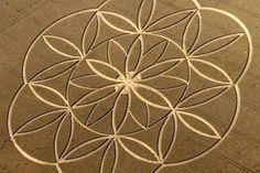 Flower of Life crop circle