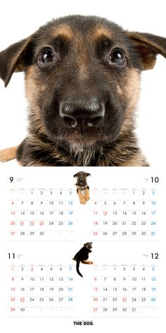 German Shepherd Dog | DOG | Artlist Collection CALENDAR 2016