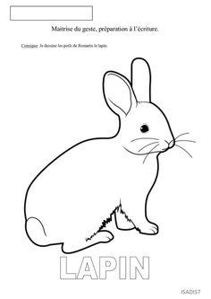 Les poils du lapin