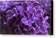 The Purple I Love By Irene Vital Canvas Print featuring the pyrography The Purple I Love by Irene Vital