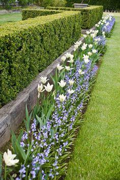 tulips and purple Ina Garten's gardens #GardenBorders