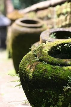 Blend buttermilk and moss and paint on pot - I really have to try this. I saw it done as writing on a wall once too.. so cool.