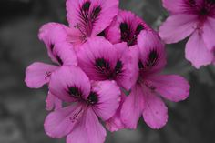 Purple and mono by Rui Militao on 500px