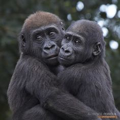 Brother and sister by Florence Perroux on 500px