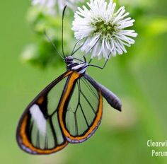 """Happiness is a butterfly, which when pursued, is always just beyond your grasp, but which, if you will sit down quietly, may alight upon you"" Nathaniel Hawthorne"