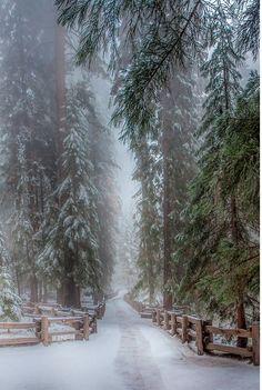 winter, quiet