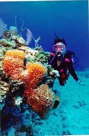 Go Scuba diving in Abaco, Bahamas with Treasure Divers or Dive Abaco.