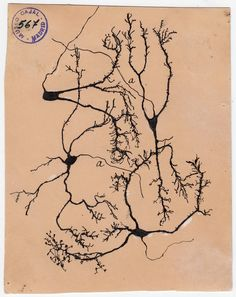The Beautiful Brain Exhibition of the work of Santiago Ramon y Cajal