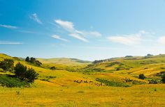 East of the hills between Sausalito and Petaluma you'll find wine country.