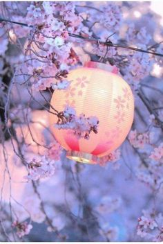 Japon : le hanami et la floraison des cerisier (Sakura, lantern, Japan) Japon Tokyo, Kyoto Japan, Japan Japan, Chinese Lanterns, Flowering Trees, Japanese Culture, Belle Photo, Beautiful Places, Beautiful Pictures