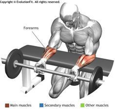 FOREARMS - PALMS DOWN WRIST CURL OVER A BENCH
