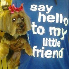 Mandy #yorkie #puppycut #groom #lilWhoopie #vaBeach