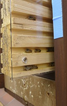 """Watch the bees! - new Orchard Solitary Bee Observation Nest Box """" Inspired by nature, driven by science"""" All Nurturing Nature solitary bee observation nest boxes has been designed to provide optim..."""