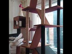 Mainan kucing,cat condo,cat scratcher - YouTube