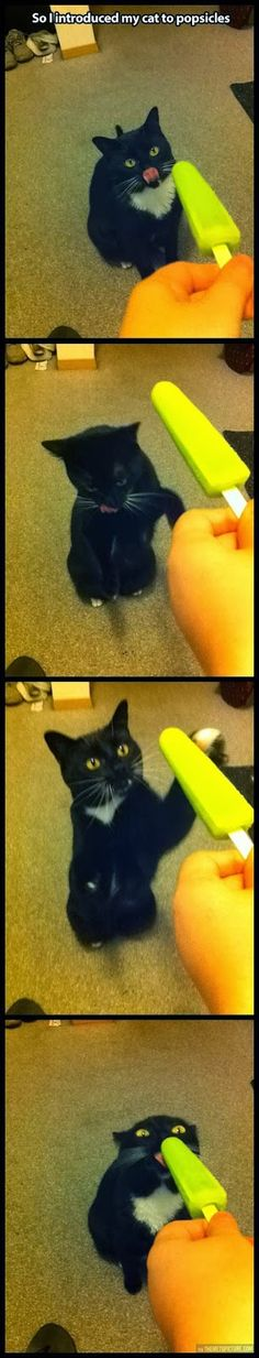 So this cat discovered the awesome flavor of popsicles