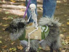 Funny Pet Costume for a Halloween Run