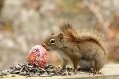 Happy Easter my furry friends! Remember to share your tasty treats! #Eastersquirrel #Squirrel #Quotes
