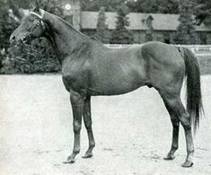 Ksar, a great champion who won back to back Arc de Triomphes. He was sire of Tourbillon. He was by Bruleur and out of the champion race mare Kizil Kourgan by Omnium II.