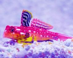 Saltwater Fish: Saltwater Aquarium Gobies, Blennies, Jawfish  I want you to have one of these!  @caitlyndragoo
