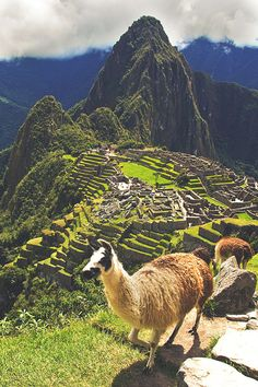 Discover the top 8 most spiritually activating places to visit in peru, from ayahuasca retreats deep within the jungle to the heights of the Andes mountains.