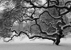 Winter Tree by Josh Friedman