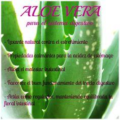Los secretos del Aloe Vera para mejorar el sistema digestivo. #digestion #saludynutrición