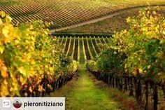 #Rensta #Repost: @pieronitiziano via @renstapp   Percorsi.  Manchi solo te. #acolazione #tuttoesaurito #tuscany #toscana #albettina #sunrise #toscanodocg #siena #landscape #minimal #green #collinetoscane #travel #usa #love #natural #naturallight #theglobewanderers #theheavenearth #italianlandscapes #discovertuscany #wine #docg #chianti #gallonero #red #yellow