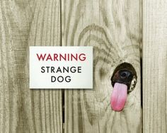 dog tongue fence strange I Love Dogs, Puppy Love, Cute Dogs, Silly Dogs, Awesome Dogs, Dog Pictures, Funny Pictures, Funny Dog Signs, Hilarious Sayings
