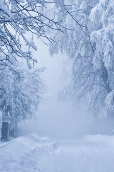 foto de 451 meilleures images du tableau ⛄️ NATURE IN WINTER ✫ Hiver ...