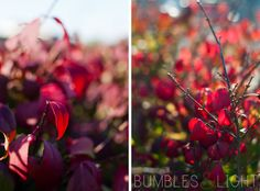 Love these reds from @Rebecca Nichols of Bumbles & Light