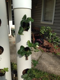 A vertical solution to grow your plants. Picture features a strawberry plant!