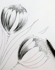 A drawing study of 2 Proteas - Modern Protea Art, Protea Flower, Drawing Studies, Fabric Painting, Watercolour Painting, White Art, Custom Art, Public Art, Art Sketches