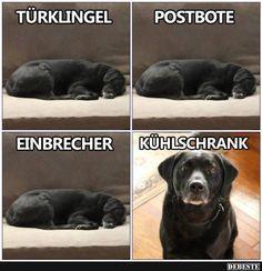 Die 112 Besten Bilder Von Lustige Hunde Spruche Funny Animals