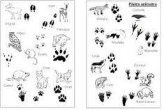 empreintes animaux de la forêt:
