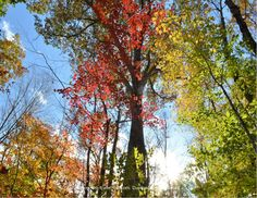 Enjoying an amazing medley of #fall colors while #hiking at Devil's Hopyard State Park in East Haddam, Connecticut.